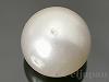 シェルパール/貝真珠 20mm (丸玉) ホワイト ×1個
